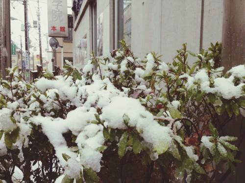 140214_yuki