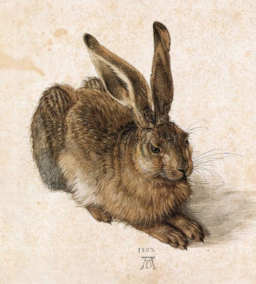 540px-Durer_Young_Hare